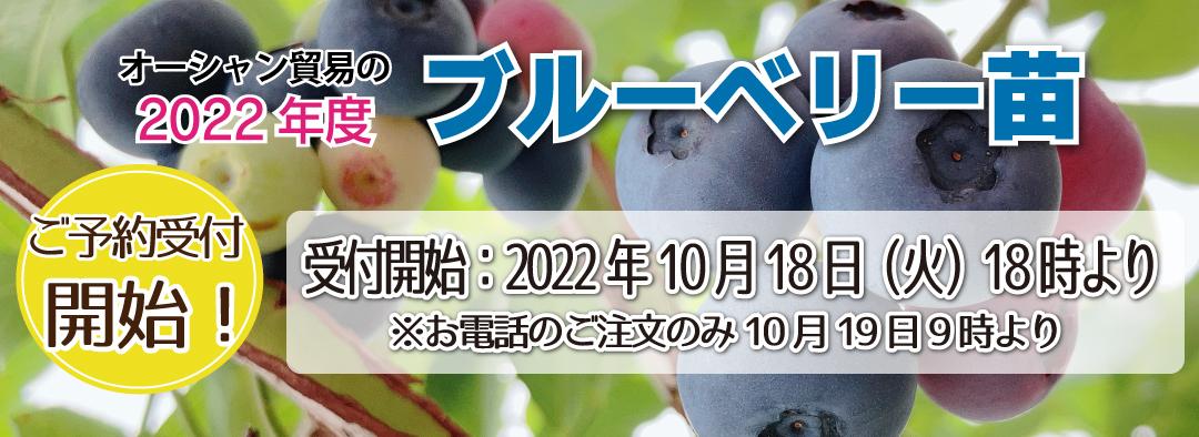 2019年ブルーベリー品種予約受付